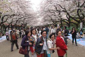 sakura lentebloesem reis Japan tokyo iki Travels