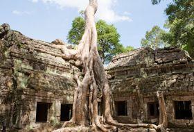 cambodja siem riep angkor wat boom