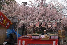 japan Kyoto kersenbloesem