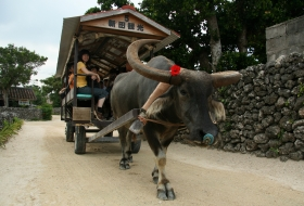 Japan Okinawa buffel vervoer