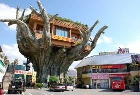 Japan Okinawa art house