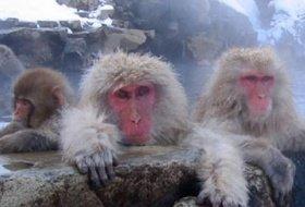 sakura lentebloesem reis Japan yudanaka iki Travels