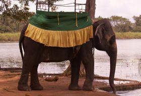 Sri Lanka reis Olifant iki Travels