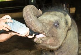 reis Sri Lanka totaal olifanten weeshuis iki Travels