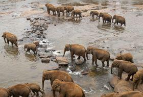 Sri Lanka reis Olifanten iki Travels