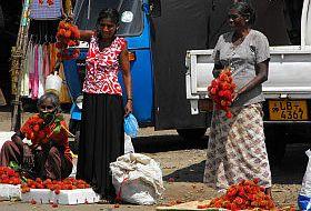 Sri Lanka reis markt iki Travels