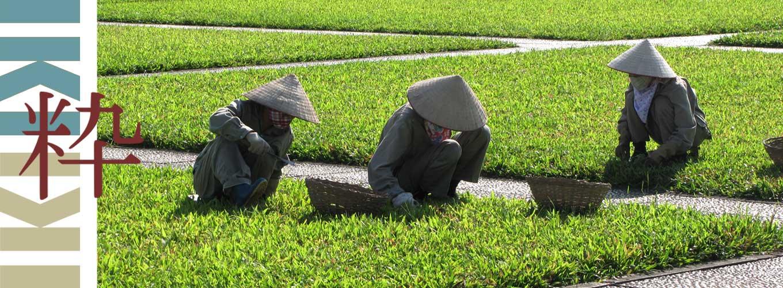 Vietnam reis Fotografie iki Travels