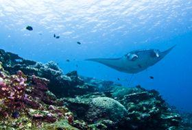 Japan ishigaki manta rog duiken en snorkelen