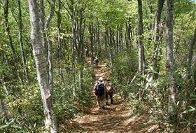 reis Japan Shinetsu trail wandeltocht iki Travels
