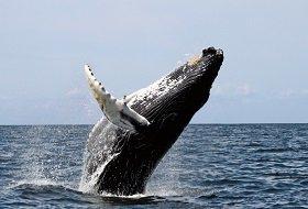 Ongerept hokkaido noord honshu Japan iki travels whale watching