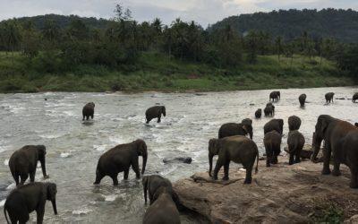 Sri Lanka in november door Eva