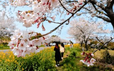 Drie weken Zuid-Korea in april door Janine (week 1)
