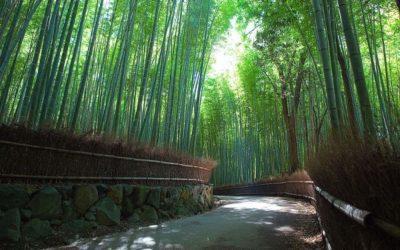 Vier dagen Kyoto in april door Herman