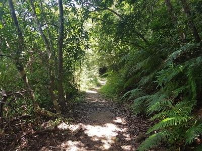 Okinawa Iriomote Jungle