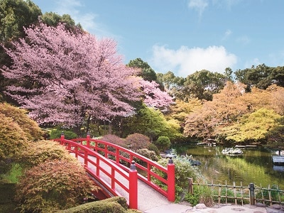 Japan Tokyo New Otani Hotel Garden sakura