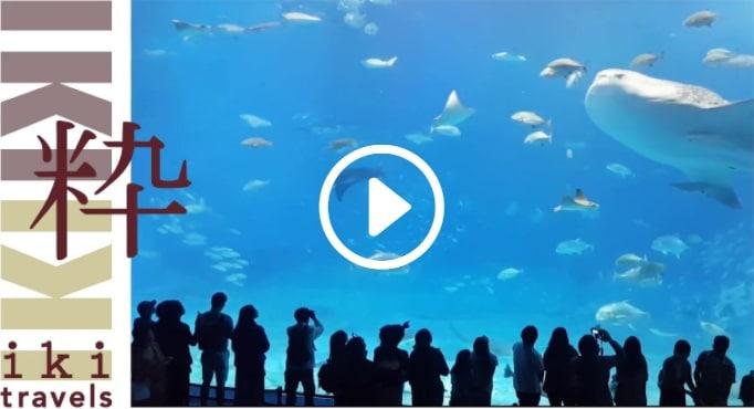 Video Pagina Homepage