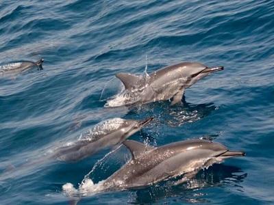 Taipei Dolfijnen Spotten